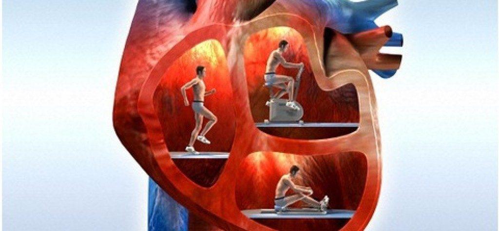 физические нагрузки защищают сердце