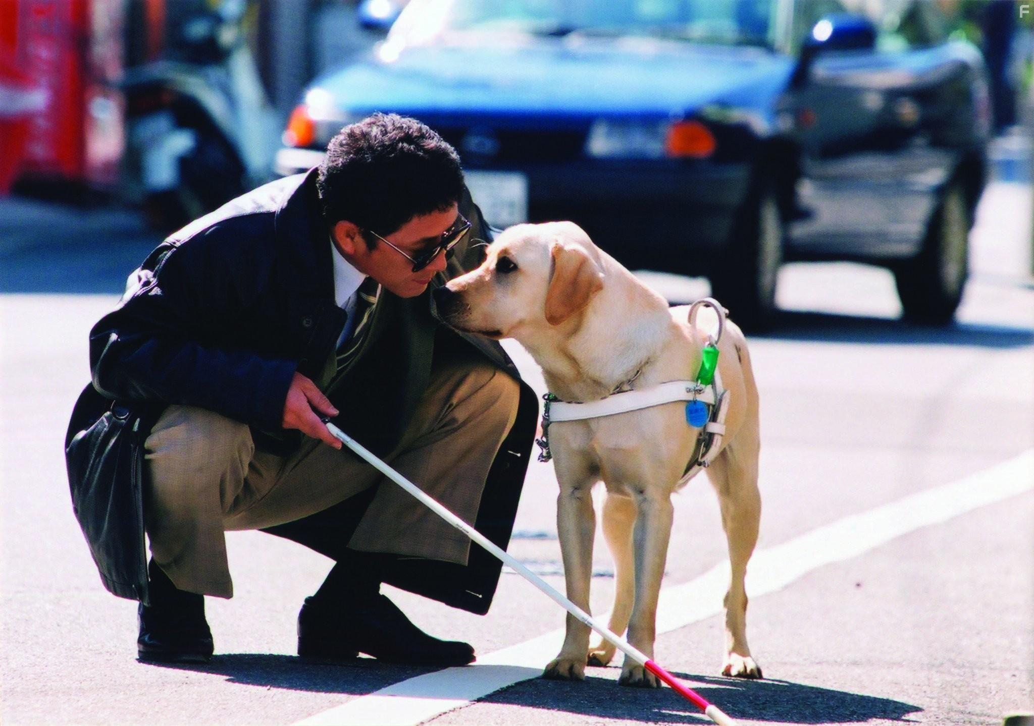 Как работает собака поводырь